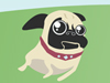 Free Pugs Screensavers